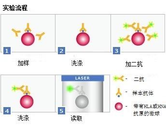 HNA 抗体检测.jpg