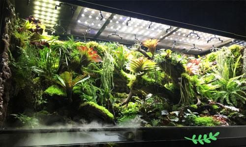 海口热带雨林景观,市内雨林景观