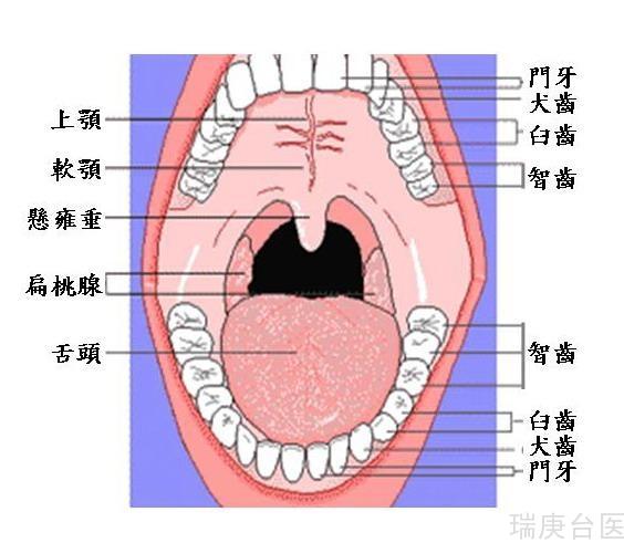 臺灣長庚質子治療 | 口腔癌VS傳統治療 怎么樣